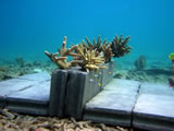 Sustainable Tourism Based on Coral Reefs at Mu Koh Chang Island