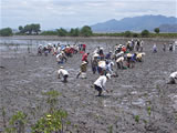 Rehabilitation of Habitats and Sustainable Use of Fisheries Resources in the Con Chim Area, Thi Nai Lagoon