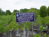 Community Involvement, Public Awareness, and Education for Mangrove Conservation and Restoration in Trat Province, Thailand